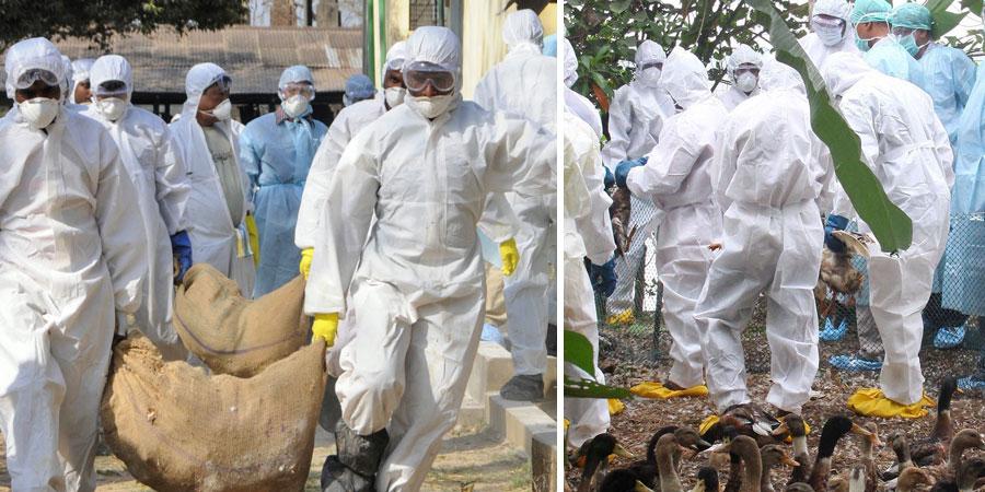 koyilandy-news-live-bird-flu
